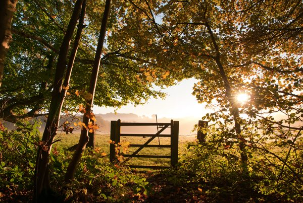 autumn in the Cotswolds