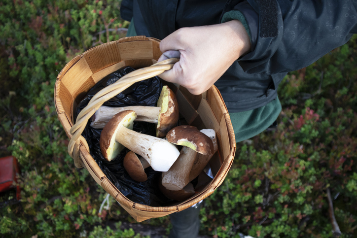 Close-up photo of a hand holding a basket of mushrooms in the forest
